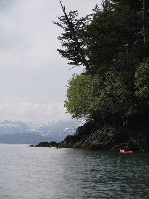 image dans le golfe de Prince William Sound. Alaska